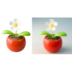 Šokanti gėlė